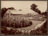 Greenhouse and garden, not dated