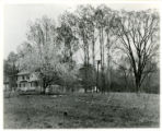 Apple tree in blossom, Myers & Gardner, 37 Washington St., 05/06/1930, Morristown, NJ