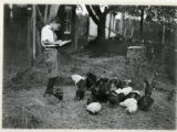 Mrs. Frank A. Goss' son with chickens, 08/04/1919, Washington Valley, NJ