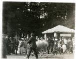 Morris County Fair, Ben Sire with his prize cow, 09/27/1919, Morristown, NJ