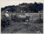 Farm, owned by Arthur R. Quimby, 9/4/1937, Morristown, NJ