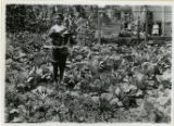 Individuals, young man holding cabbage in cabbage patch, 8/8/1919, Dover, NJ