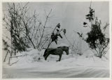 Toy horse in snow, 11/20/1922, 3 Miller Road, Morristown, NJ