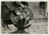 Cats with monkey in basket, Cappel Market, 3/30/1926, Morristown, NJ
