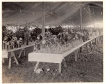 Morris County Fair, Flower Exhibit, 09/21/1926, Morristown, NJ