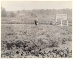 Community Gardens, 07/27/1923, Morristown, NJ