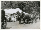 Morris County Fair, blue ribbon team (Harry Prudden) at the , 9/24/1921, Morris County, NJ