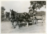 Charles Vail with horses and wagon, Morris County, NJ, 9/8/1920