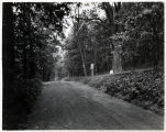 Jockey Hollow road, 06/07/1932, Morristown, New Jersey
