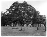 Historical oak tree at Presbyterian cemetery, 06/30/1932, Basking Ridge, New Jersey
