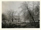 Burnham Park, trees covered with ice, 12/27/1926, Morristown, NJ