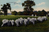 Normandy Heights pasture scene, Otto Kahn estate, circa 1910, Morristown, NJ